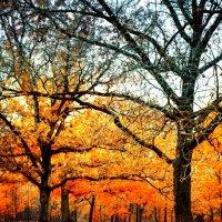 Осенний лес. :: Gene Brumer