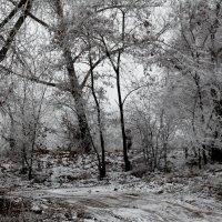 В зимнем лесу :: Dr. Olver ( ОлегЪ )