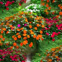 Цветочный ковёр :: Nina Yudicheva