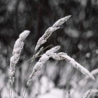 Зима :: Вероника