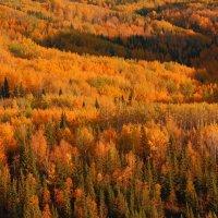 осень в восточном казахстане :: vladimir polovnikov