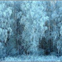 А лес стоит загадочный... :: Геннадий Ячменев