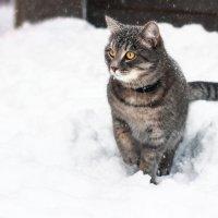 снегу намело :: Наталья Скипина