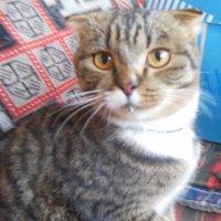 Соседский кот в гости пришел полакомится) :: Татьяна
