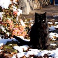 Кошачья прогулка :: Дина Дробина