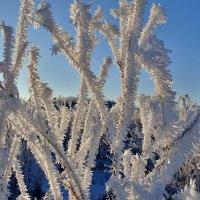 Изморозь, начало декабря :: Геннадий Ячменев