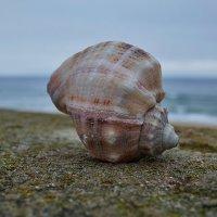 Морской натюрморт :: Swetlana V