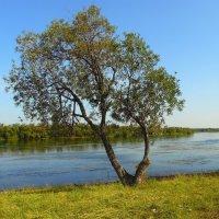 У реки. :: nadyasilyuk Вознюк
