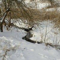 Зимние картины... :: владимир