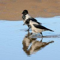 подруги на пляже :: linnud