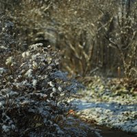 Первый снег :: Darya Voronova