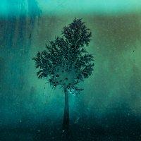 дерево из инея :: Alexandr Staroverov