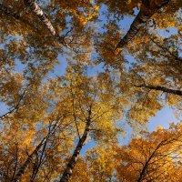 Осень в небе :: Александр Синдерёв