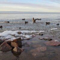 зимний залив :: Елена
