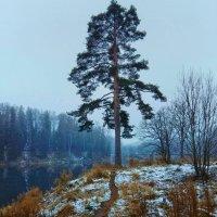 Первый снег :: Наталья Ерёменко