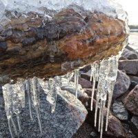 ледниковый период :: Елена