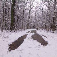 где то в лесу :: Владимир Зырянов