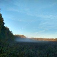 Лес туман осень :: Олег Романенко
