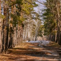 Весна в лесу :: berckut 1000