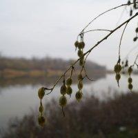 У пруда биофабрики в ноябре) :: Дина Дробина