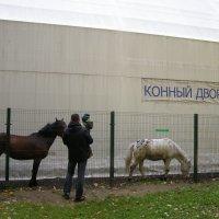 Конный двор :: Анна Воробьева