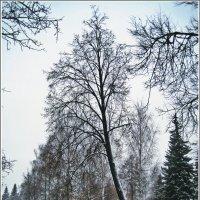 Прогулки по Ижевску. Декабрь. :: muh5257