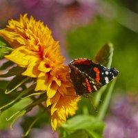 Бабочка :: Седа Ковтун