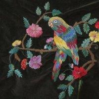 Попугай на ветке :: Дмитрий Никитин