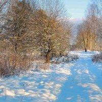 Зимними дорожками :: Павлова Татьяна Павлова