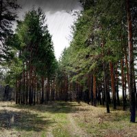 И снился сон про дождь слепой в начале лета.. :: Андрей Заломленков