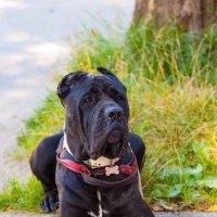 Пёс :: mishel astoria