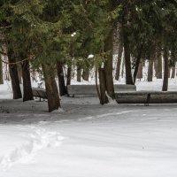 Снег не помеха... :: Владимир Безбородов