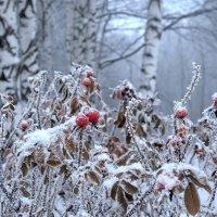 На опушке зимнего леса, возле Ярославля :: Николай Белавин