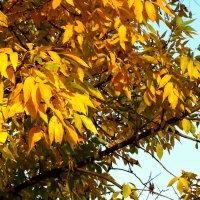 Осени золотые россыпи... :: Тамара (st.tamara)