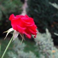 Красота в молодости... :: Тамара (st.tamara)