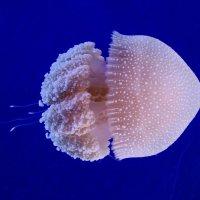 Подводный мир Лангкави (Underwater World), Малайзия. :: Edward J.Berelet