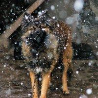 Пёс Лёнчик. :: Olga Grushko