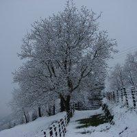 Зима в Стране Басков. :: Olga Grushko