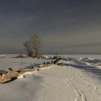 замерзшее море :: шмакова тамара