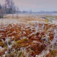 заморозок на лугу :: Александр Прокудин