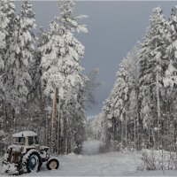 А снег идёт,а снег идёт... :: Владимир Тюменцев