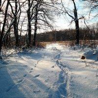 Однажды в студёную зимнюю пору я из лесу вышел..:) :: Андрей Заломленков
