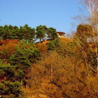 Сосновая гора в Кисловодском курортном парке :: Нина Бутко