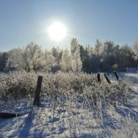 деревья  в  белых  халатах :: Владимир Коваленко
