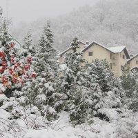 Первый снег :: Алексей Галкин