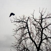 Осень, начало зимы... :: Serg