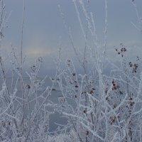 Туманное утро :: Владимир Стаценко
