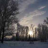 тополя  в  зимнем  пуху :: Владимир Коваленко