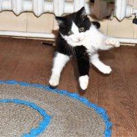 прыжок. :: petyxov петухов