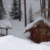 У леса на опушке... :: Светлана Игнатьева